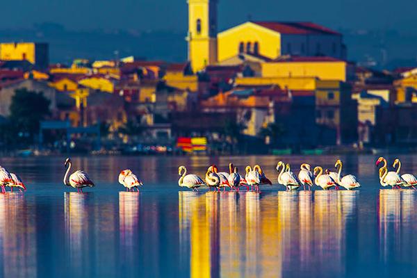 600x400 foto lago di lesina 14