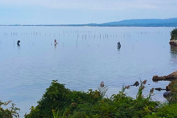 600x400 foto lago di varano 12